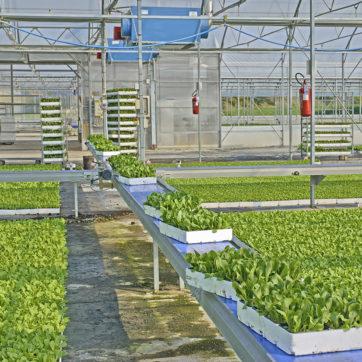Lavoro di scarico seminiere dalla serra