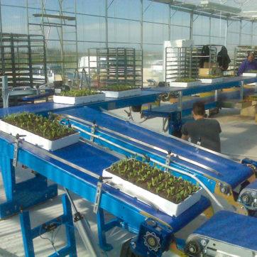 Sistema a nastri per il carico e lo scarico in serra direttamente dall'area lavorazione