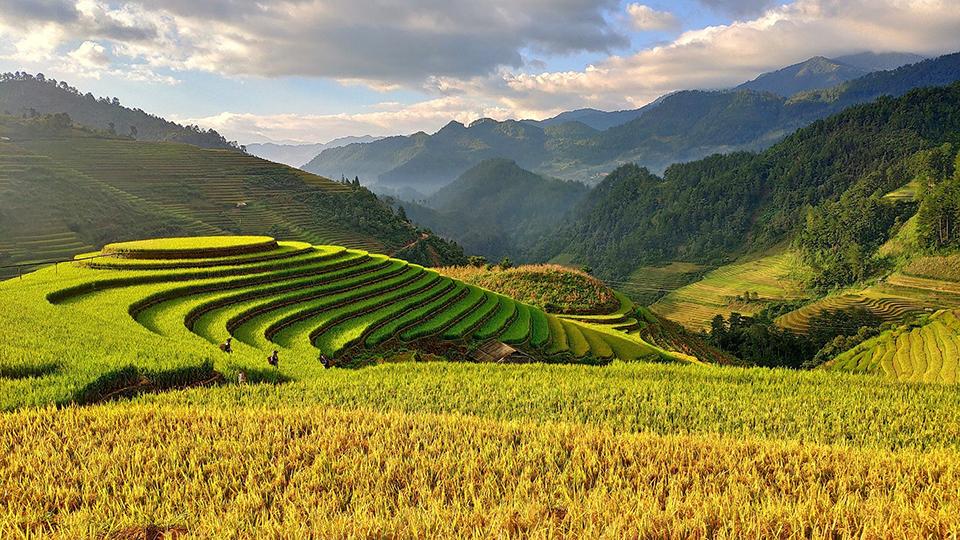 hortex vietnam horticolture